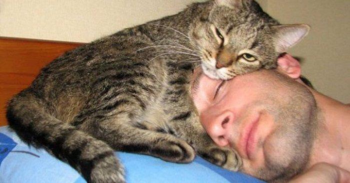 Кот прижался к голове спящего мужчины