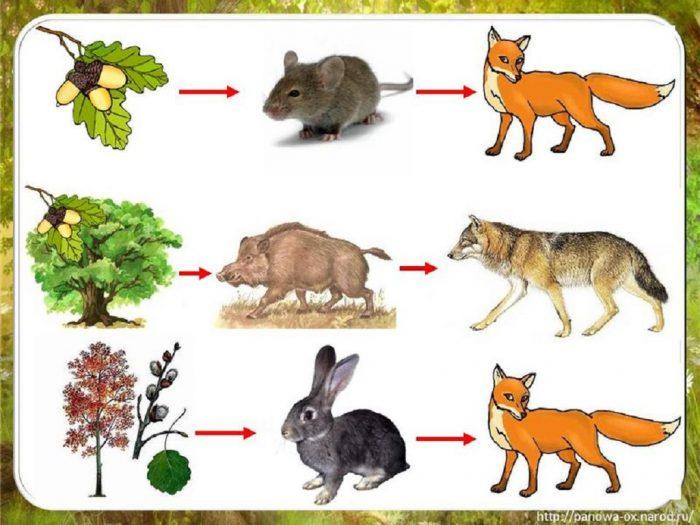 Примеры разных пищевых цепочек