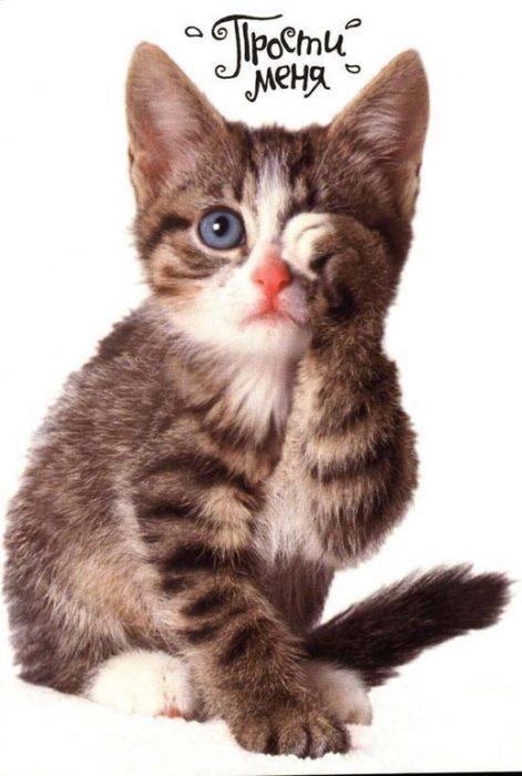 Кот с надписью «Прости меня»