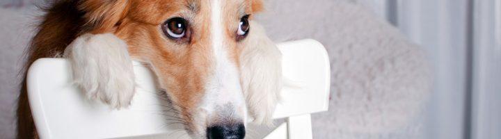 собака извиняется