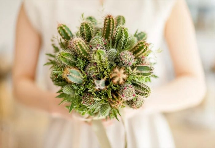 свадебный букет из кактусов