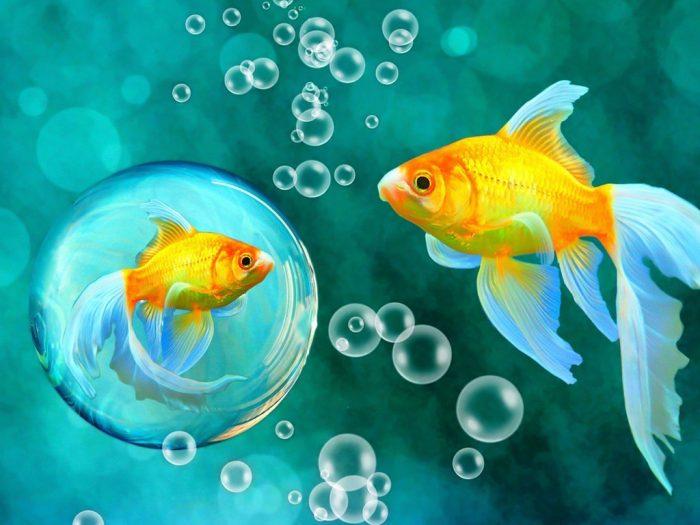Золотистые рыбки плавают в воде
