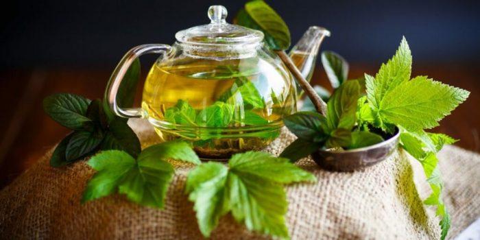 малиновый лист и чай из него