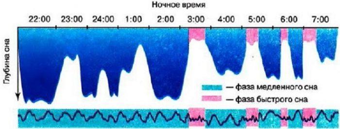 Соотношение фаз быстрого и глубокого сна у взрослого за один цикл