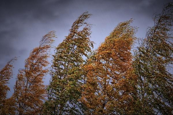 Деревья наклонены от ветра
