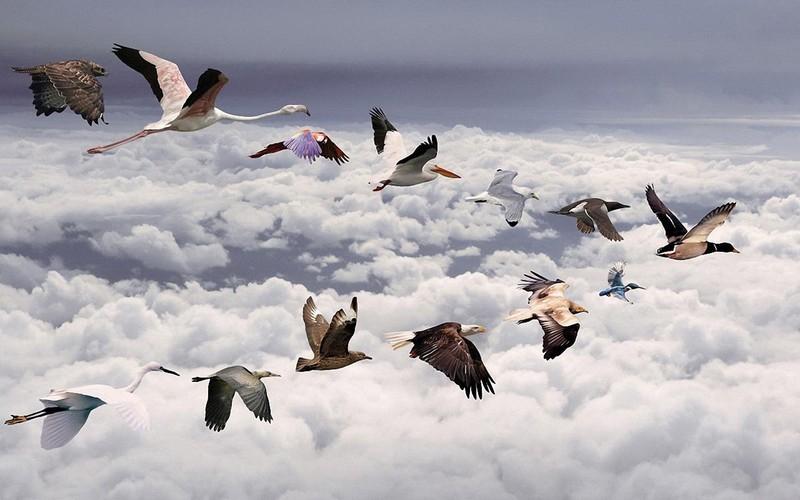 Какие птицы улетают на юг зимовать: занимательный семейный фототест
