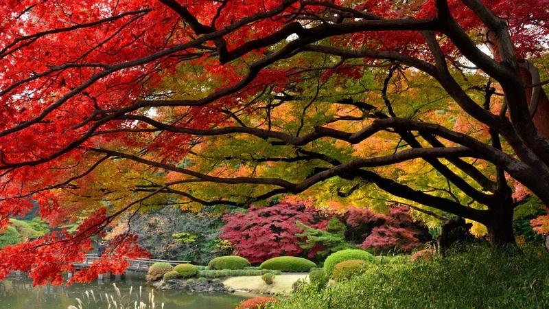 Тест: у каких растений осенью листья краснеют, а у каких желтеют или остаются зелёными
