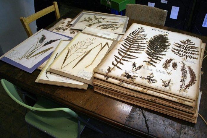 Гербарии из листьев с названиями на столе