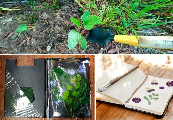 Лопатка и папка для гербария