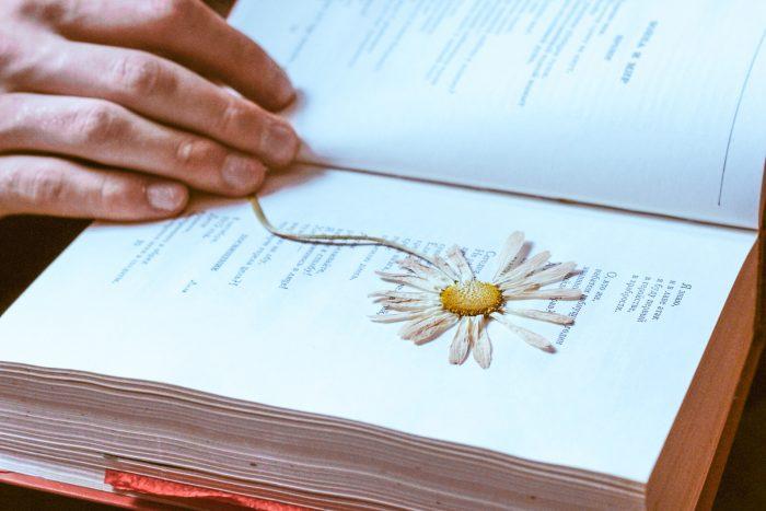 Высушенная ромашка в книге