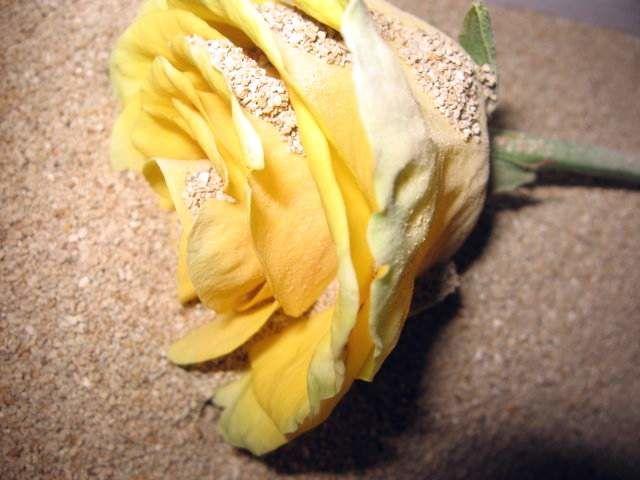 Роза в песке