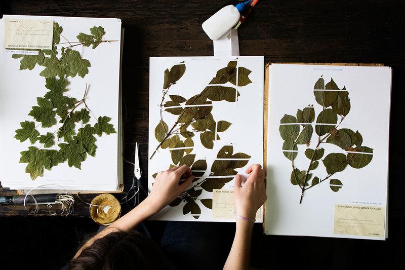Растения леса, фото и названия растений