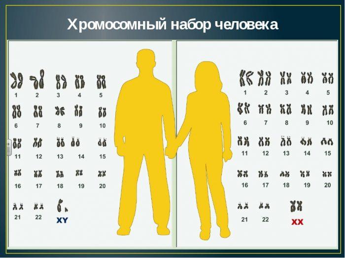 Хромосомный набор мужчины и женщины