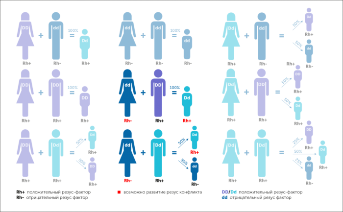 Схема наследования резус-фактора и вероятности резус-конфликта