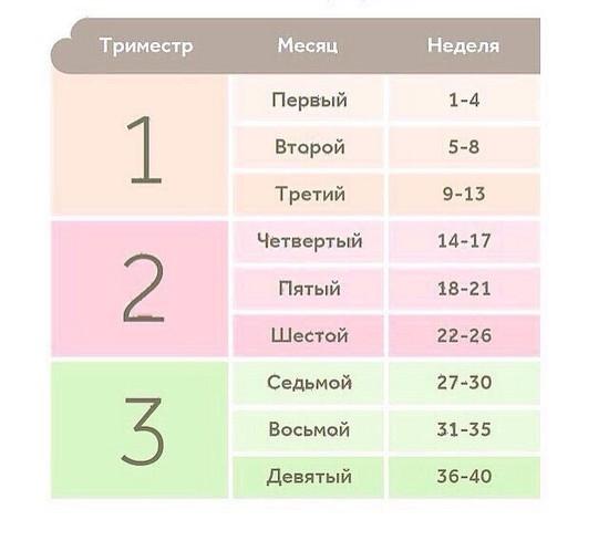 Таблица недель, месяцев и триместров беременности
