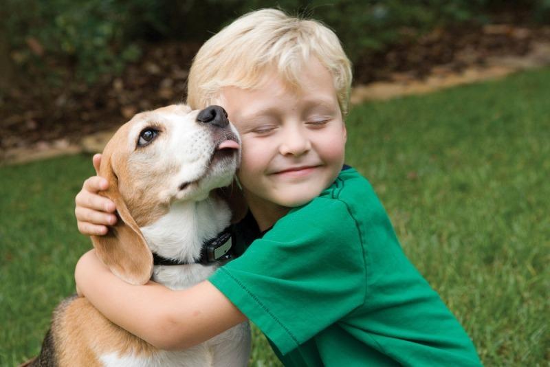 7 убедительных причин разрешить вашему ребенку завести питомца