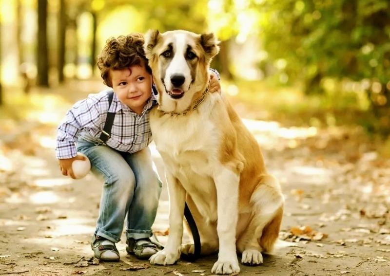 Ребенок просит собачку: плюсы и минусы, которые надо обязательно учесть