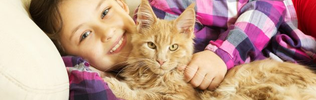 Какая порода кошек лучше для детей и почему: подборка с фото
