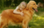 Лучшие породы собак для детей разного возраста: подборка с пояснениями специалистов